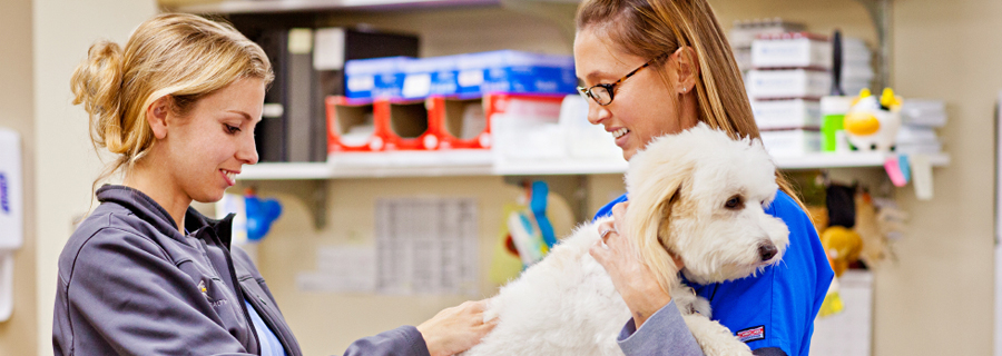 Veterinary Pharmacy and the Role of the Pharmacist Demo – VetBloom ...