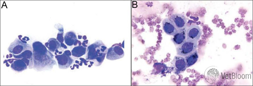 Conjunctival cytology Fig 2