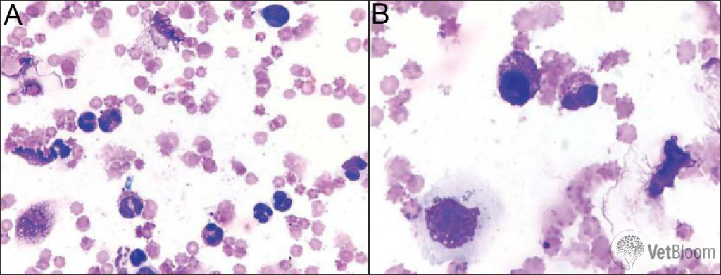 Conjunctival cytology Fig 5