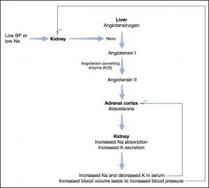 Hypoadrenocorticism - Figure 1