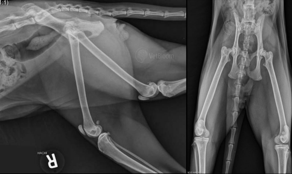 Right lateral and VD radiographs