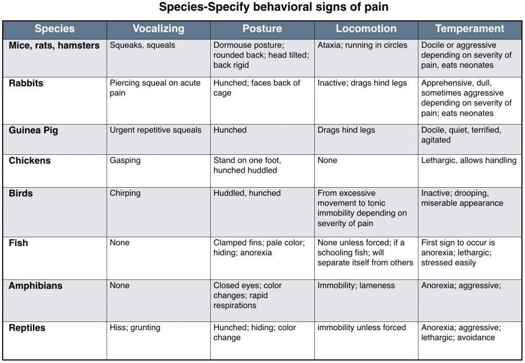 Table - Exotics behavioral signs of pain